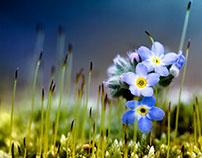 Macro | Flowers