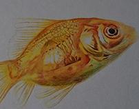 Ilustración realizada con bolígrafo
