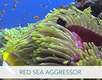 Red Sea Aggressor WBDR Video