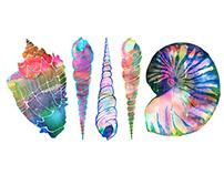 Seashell Love Illustration Series