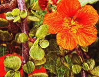 Plantas y Flores - 2da. Serie