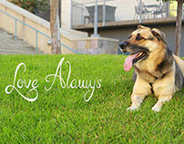 Love for Pets Banner