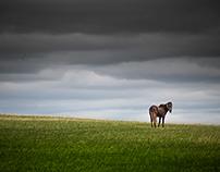 Last grassland - Genghis khan's legacy