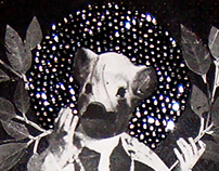 Datura Stramonium / Primavera-Pagano