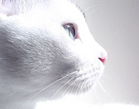 Fotos - animais