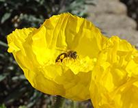 Fotos - flores