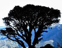 Fotografía en Parque Nacional Podocarpues