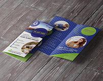 Global Education Company bi fold brochure design
