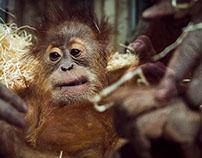 Orangs im Neunkircher Zoo