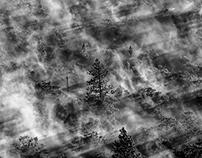 Smoky Trees
