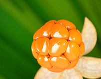 Quick Project: Cloudberries