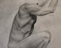 Ribcage Muscle Mass