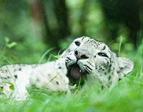 WhiteLeopard