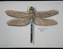 Dragonfly Platter