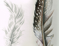 Feathers Illustration