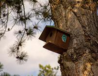 Tree photos 2