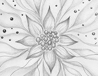 Star Flower Pencil Sketch