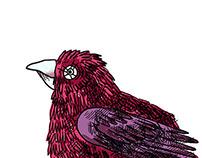 Bird | Ptica