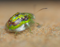 Sparkling bug....