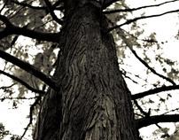die Wälder ( the woods )