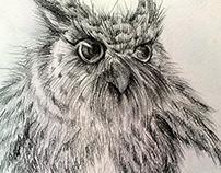 Pencil drawings (just for fun)