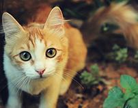 Short film - Cats in the garden