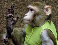 monkey vote