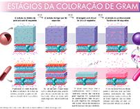 infográficos microbiologia