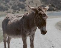 Toyota - Donkey