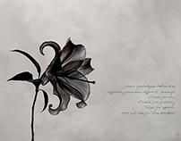 Net Florist