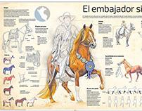 Infografía sobre el caballo peruano de paso
