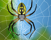 Arachnid Art and Photographs
