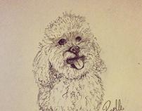 Ilustraciones Guardería Canina