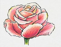 Botanical Mini Illustration Series