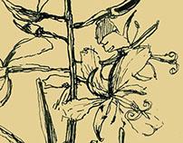 Herbals albom