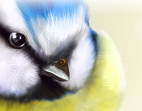 Blue-Yellow Bird
