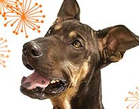 Shelter Dogs Calendar 2016