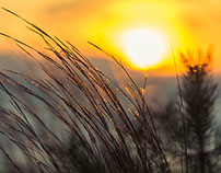Sun Scapes