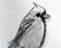 Bird Studies