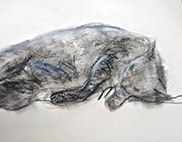 Drawing - Cat 1