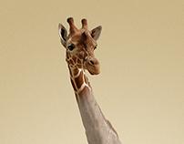 Giraffe // Photo Manipulation