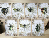 Insect Entomology: Beautiful small things