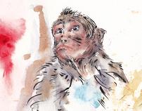 Monkey Forest Study