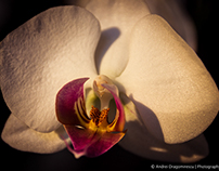 Yet Another Orchids