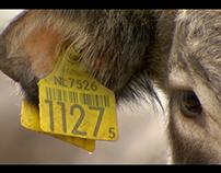 Documentaire 'Het levenswerk van kalf Jonathan 1127'