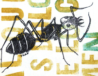insects and food