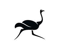 Ola Ostrich (Skillshare)