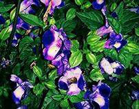 Summer Darkness - Floral Terror