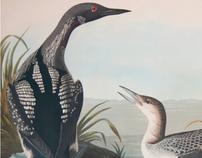 Audubon Digital Experience