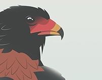 Birds of Prey : Bateleur